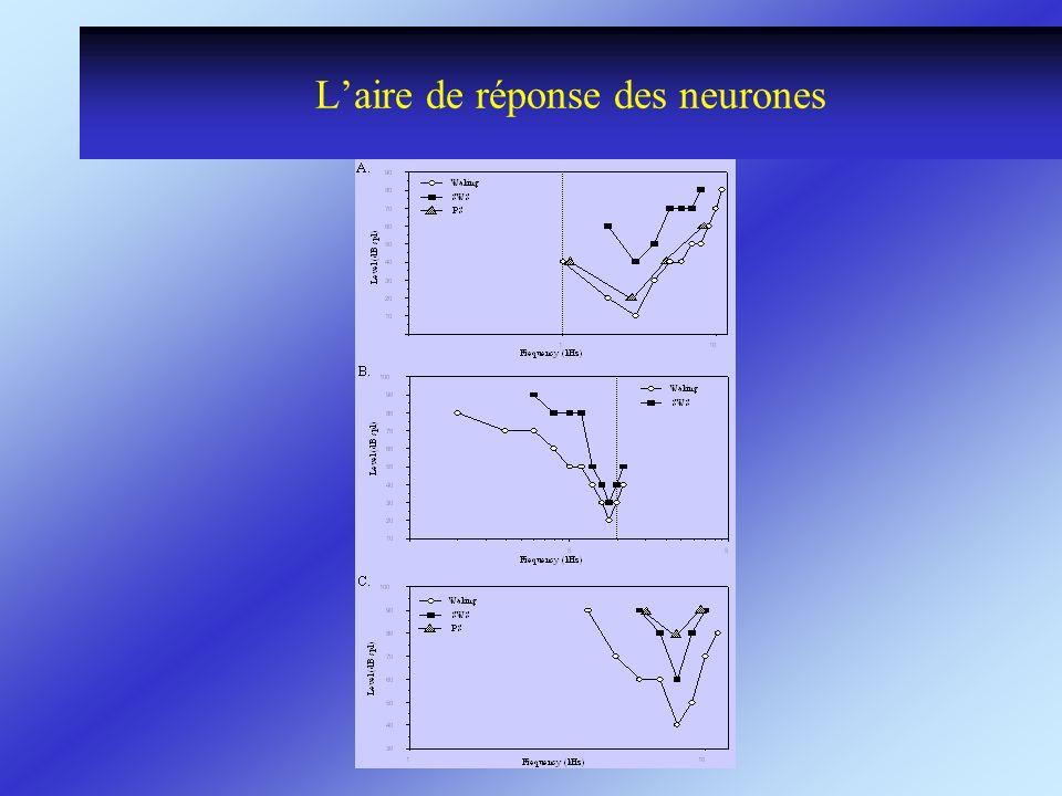 L'aire de réponse des neurones