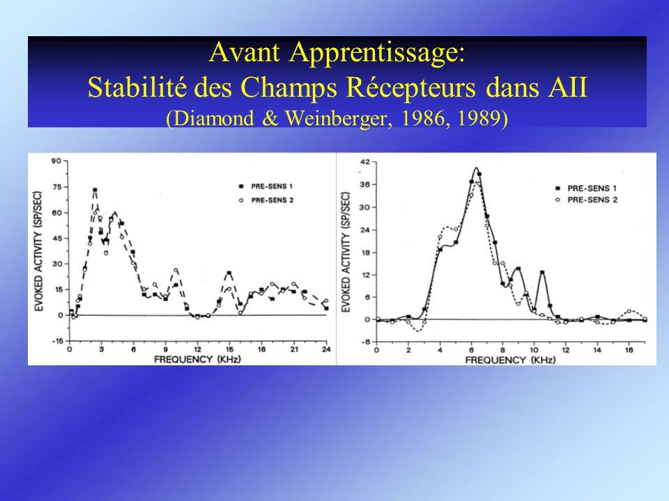 Avant Apprentissage: Stabilité des Champs Récepteurs dans AII (Diamond & Weinberger, 1986, 1989)