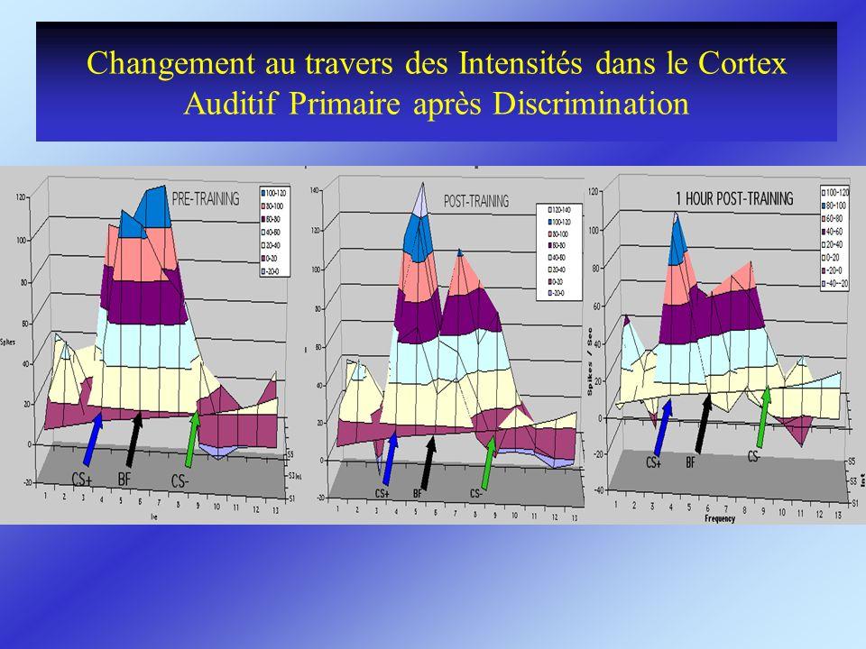 Changement au travers des Intensités dans le Cortex Auditif Primaire après Discrimination