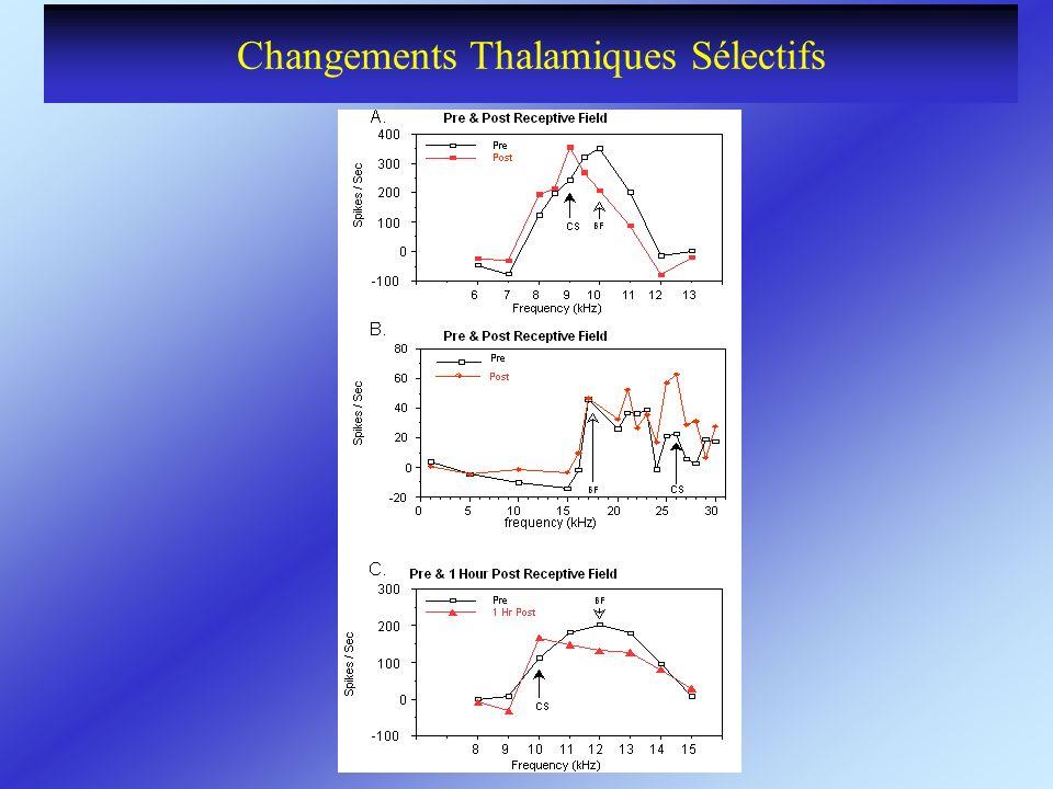 Changements Thalamiques Sélectifs