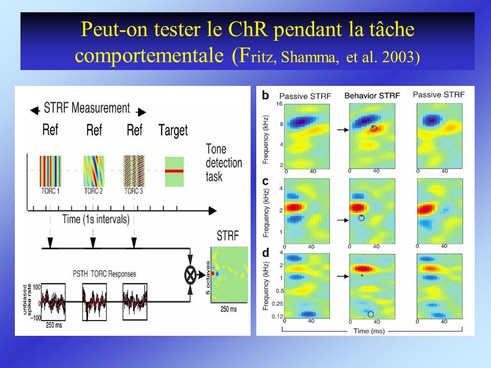 Peut-on tester le ChR pendant la tâche comportementale (Fritz, Shamma, et al. 2003)