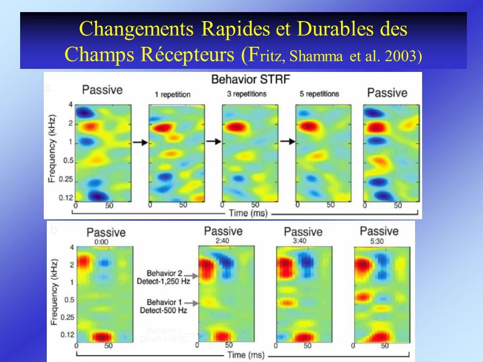 Changements Rapides et Durables des Champs Récepteurs (Fritz, Shamma et al. 2003)