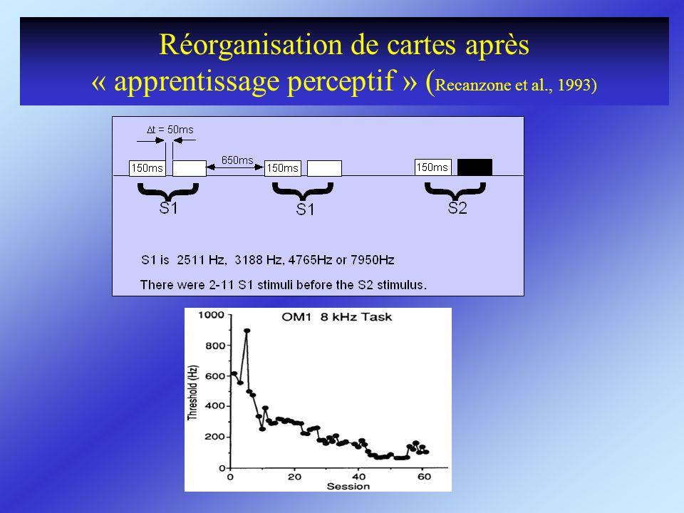 Réorganisation de cartes après « apprentissage perceptif » (Recanzone et al., 1993)