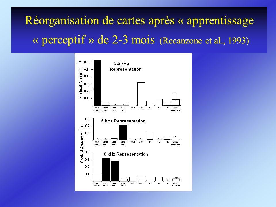 Réorganisation de cartes après « apprentissage « perceptif » de 2-3 mois (Recanzone et al., 1993)