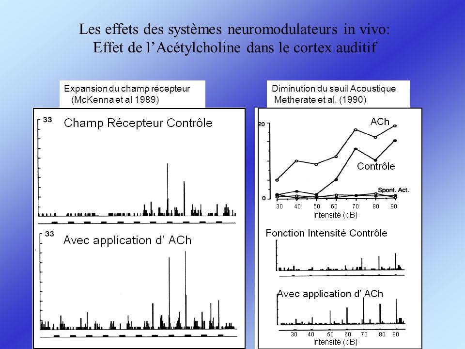 Les effets des systèmes neuromodulateurs in vivo: Effet de l'Acétylcholine dans le cortex auditif