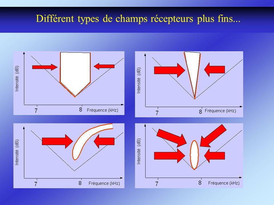 Différent types de champs récepteurs plus fins...