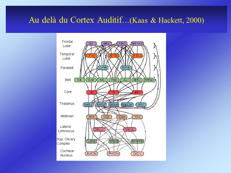 Au delà du Cortex Auditif…(Kaas & Hackett, 2000)