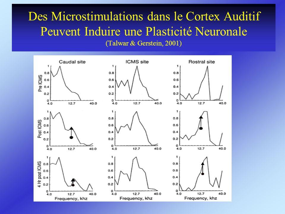 Des Microstimulations dans le Cortex Auditif Peuvent Induire une Plasticité Neuronale (Talwar & Gerstein, 2001)