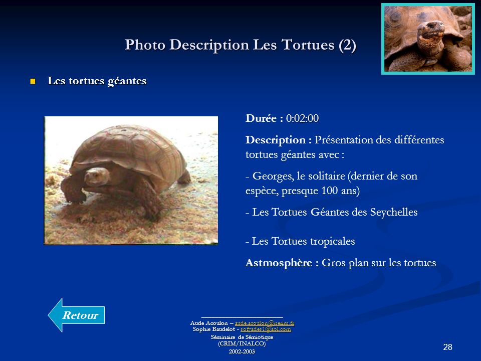 Photo Description Les Tortues (2)