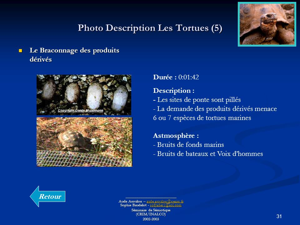Photo Description Les Tortues (5)