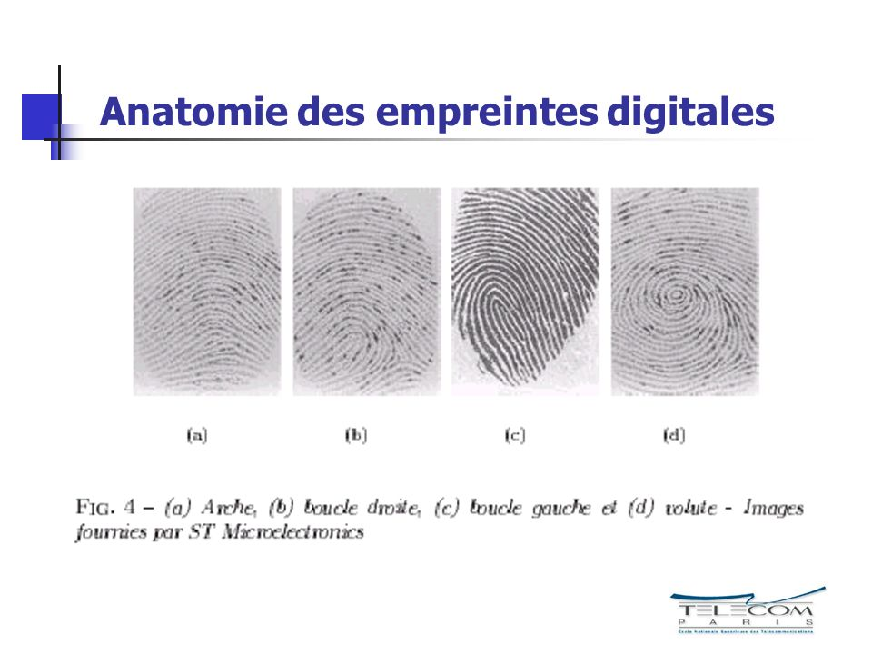 Anatomie des empreintes digitales