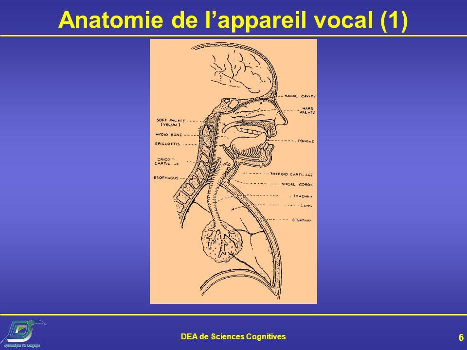 Anatomie de l'appareil vocal (1)
