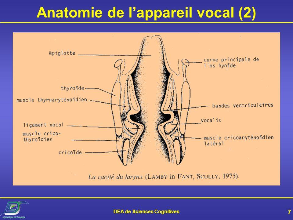 Anatomie de l'appareil vocal (2)