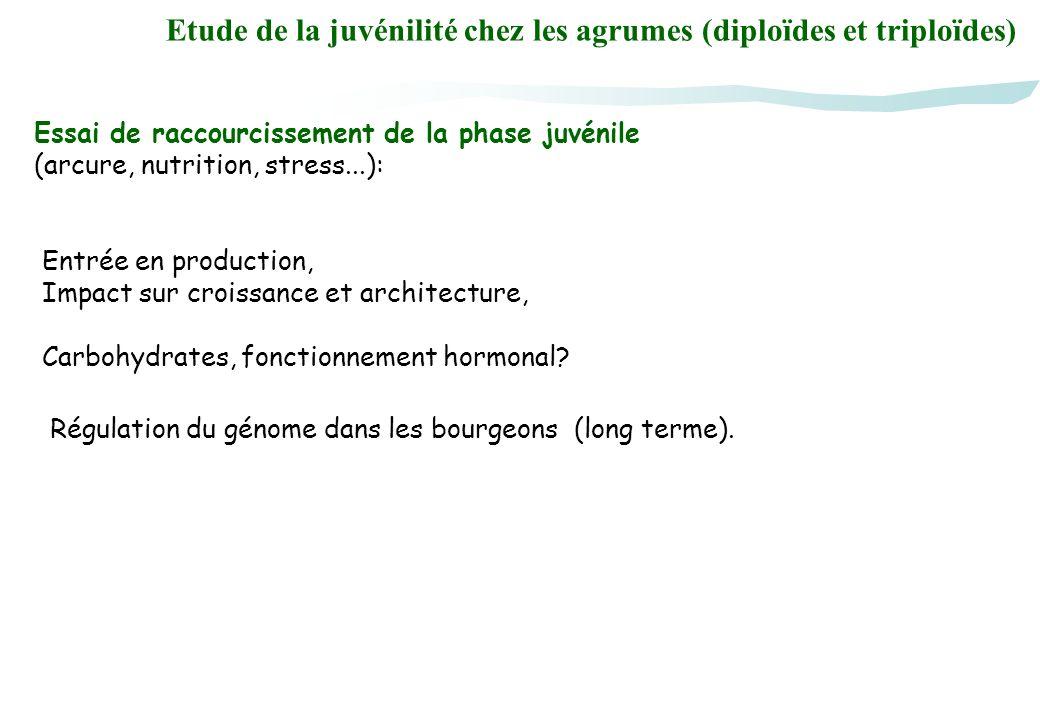 Etude de la juvénilité chez les agrumes (diploïdes et triploïdes)