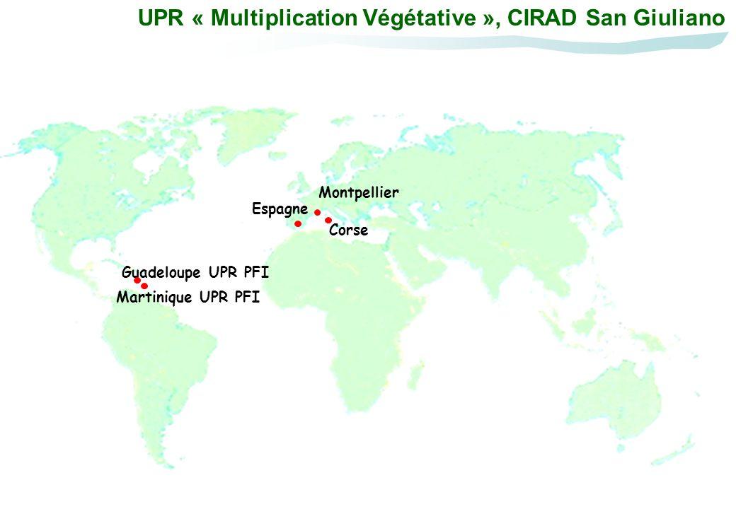 UPR « Multiplication Végétative », CIRAD San Giuliano