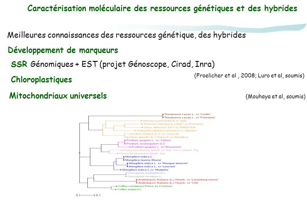 Caractérisation moléculaire des ressources génétiques et des hybrides