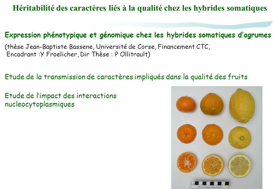 Héritabilité des caractères liés à la qualité chez les hybrides somatiques