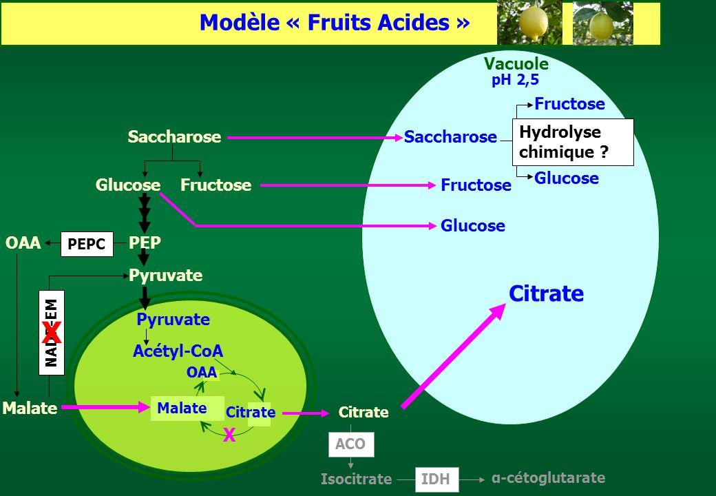 Modèle « Fruits Acides »