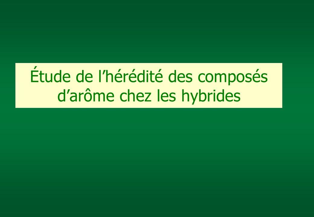 Étude de l'hérédité des composés d'arôme chez les hybrides