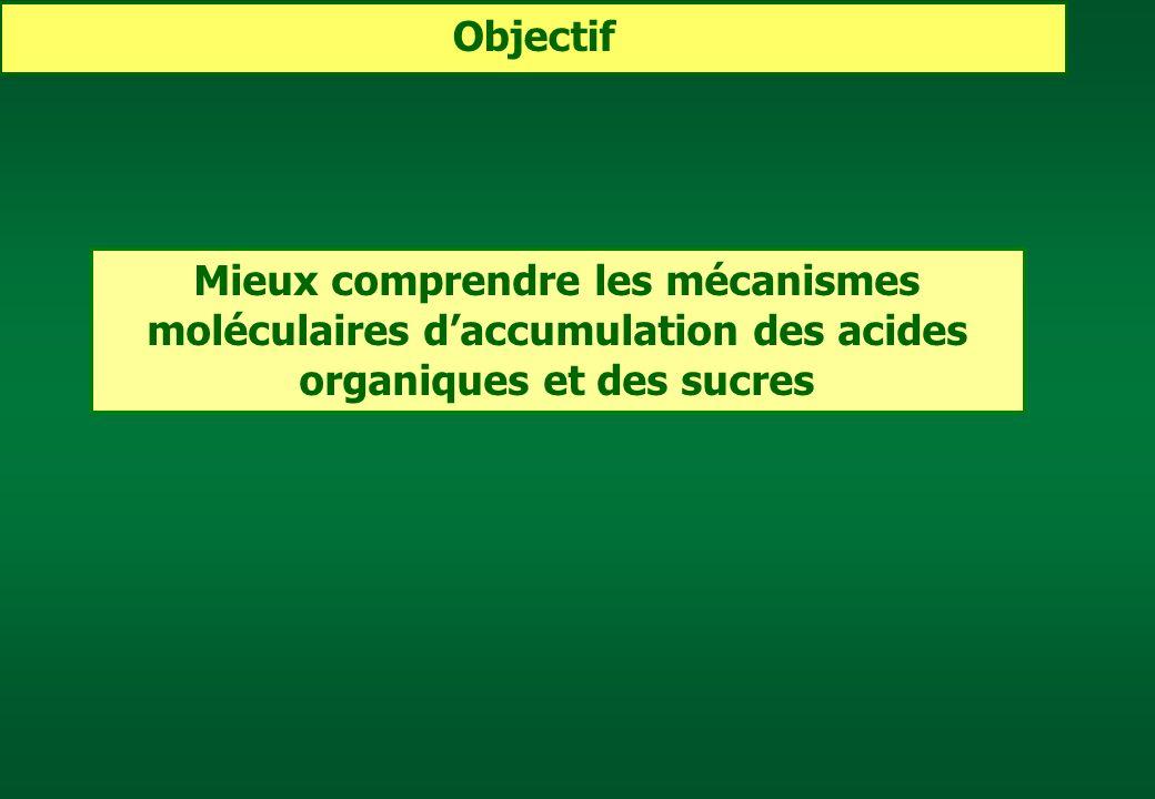 Objectif Mieux comprendre les mécanismes moléculaires d'accumulation des acides organiques et des sucres.