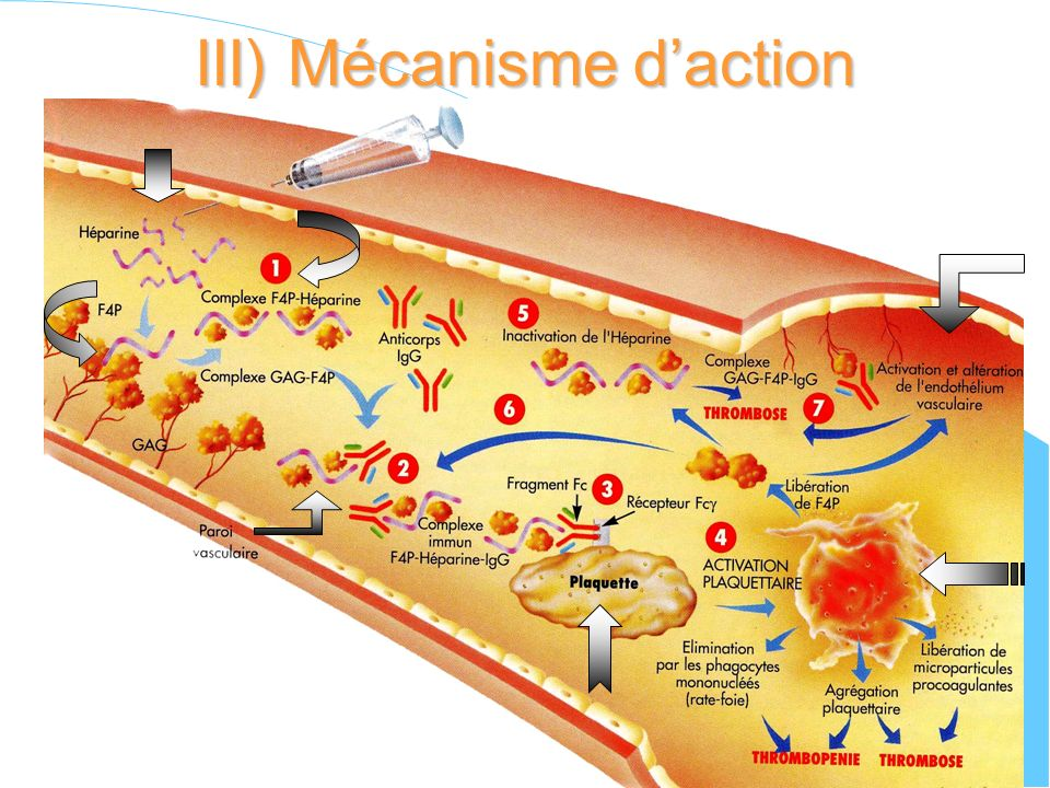 III) Mécanisme d'action