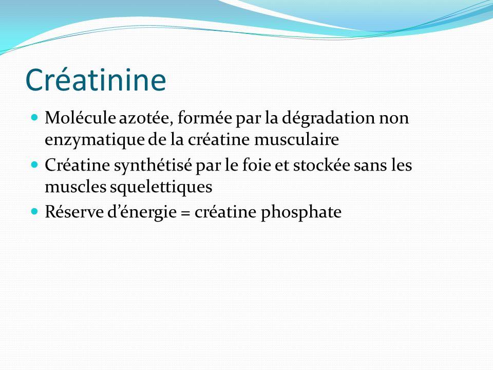 CréatinineMolécule azotée, formée par la dégradation non enzymatique de la créatine musculaire.