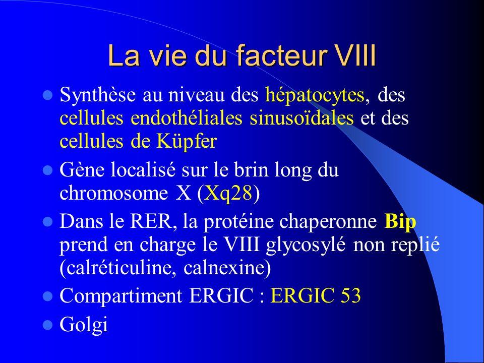 La vie du facteur VIII Synthèse au niveau des hépatocytes, des cellules endothéliales sinusoïdales et des cellules de Küpfer.