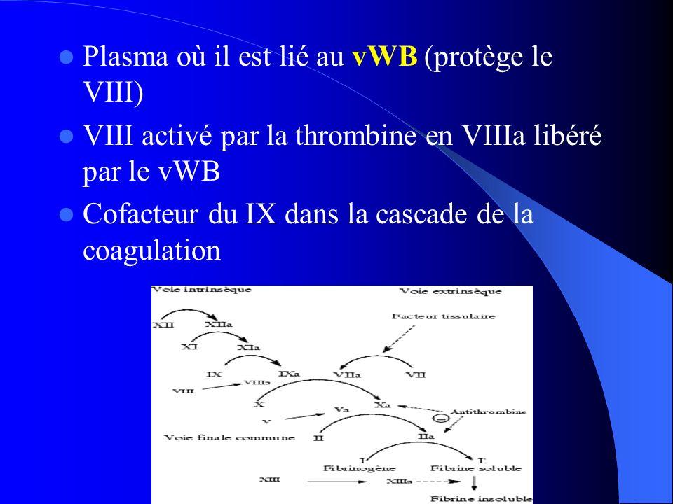 Plasma où il est lié au vWB (protège le VIII)
