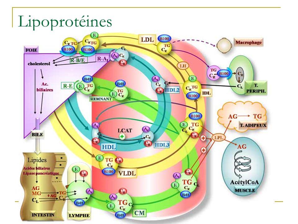 Lipoprotéines