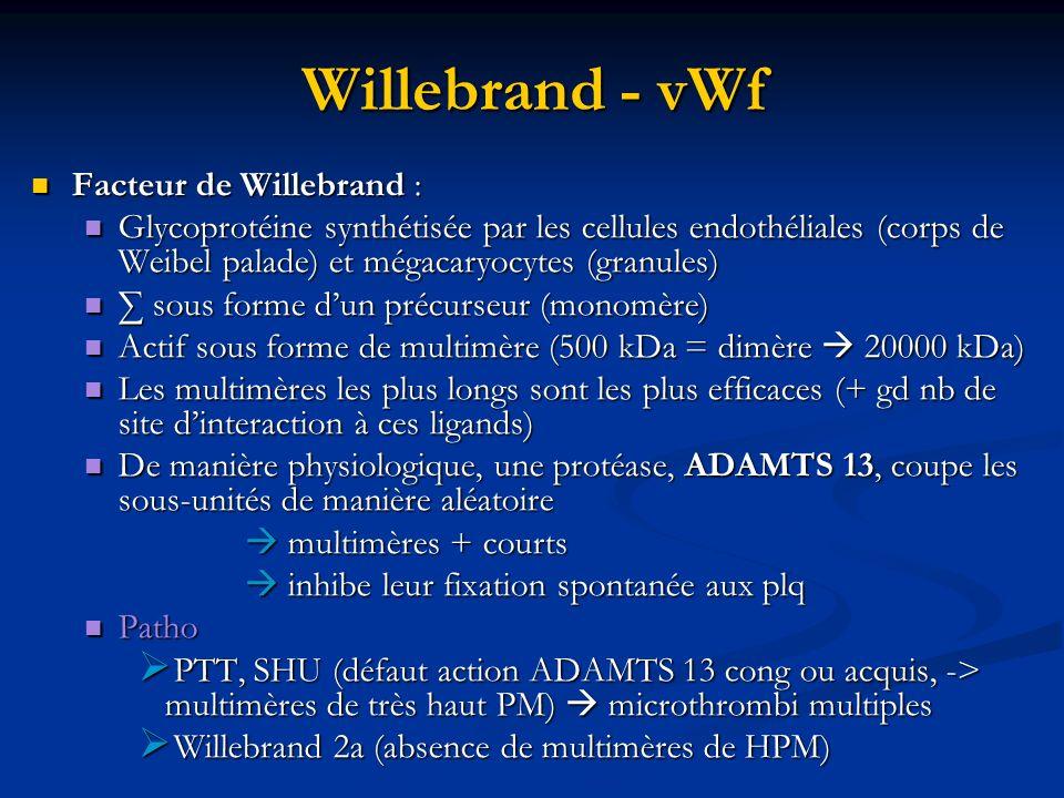 Willebrand - vWf Facteur de Willebrand :