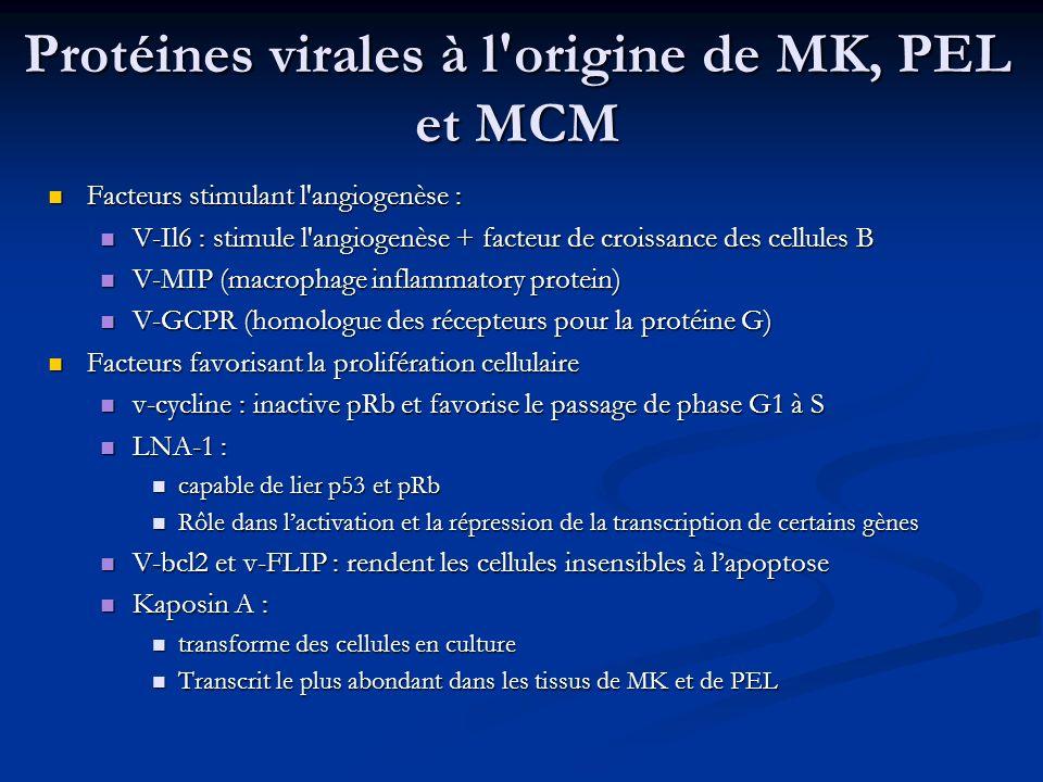 Protéines virales à l origine de MK, PEL et MCM