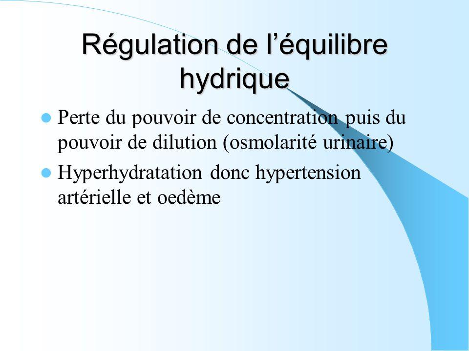 Régulation de l'équilibre hydrique