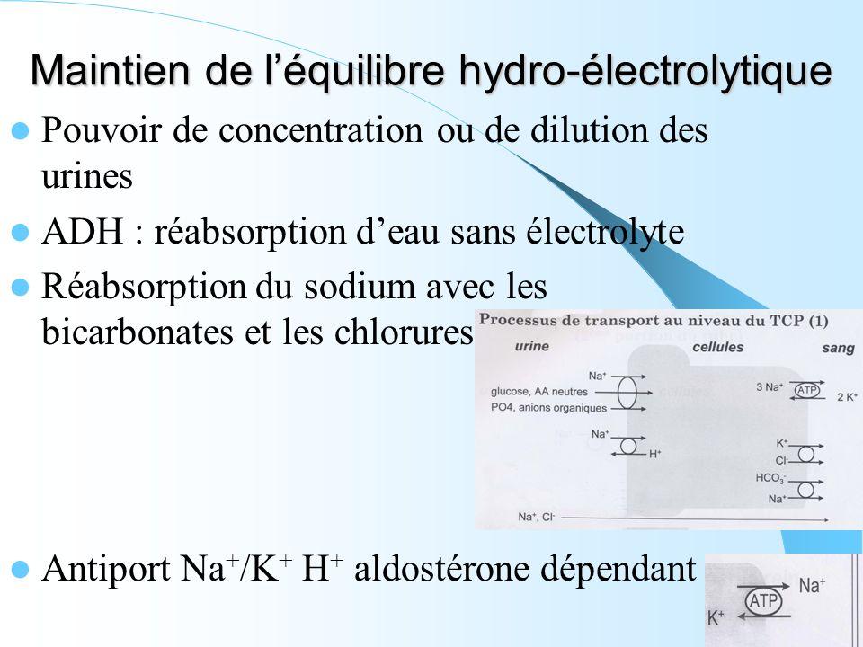 Maintien de l'équilibre hydro-électrolytique