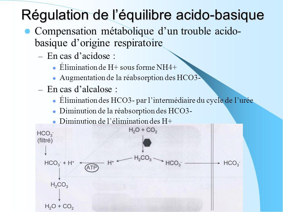 Régulation de l'équilibre acido-basique