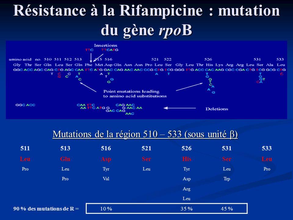 Résistance à la Rifampicine : mutation du gène rpoB