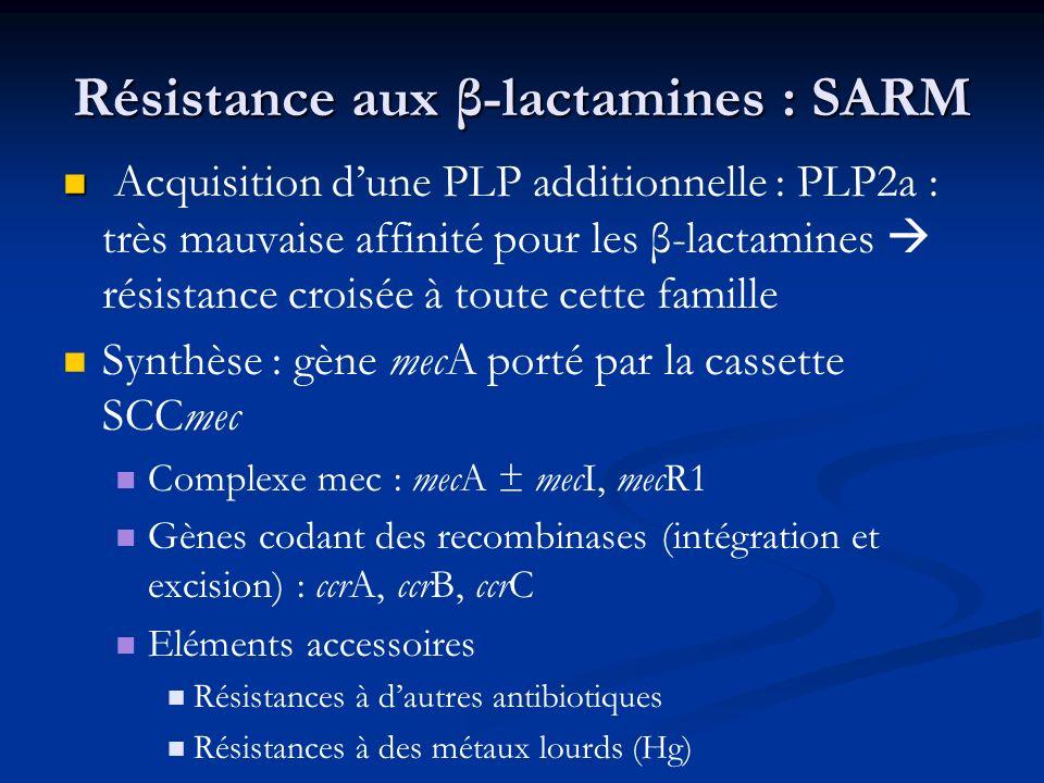 Résistance aux β-lactamines : SARM