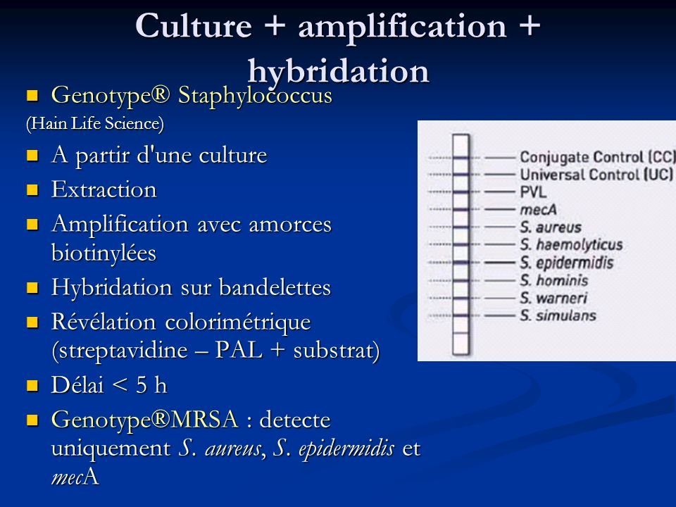 Culture + amplification + hybridation