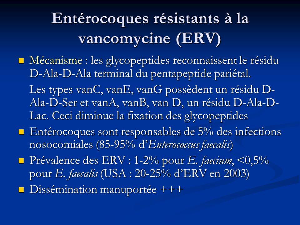 Entérocoques résistants à la vancomycine (ERV)