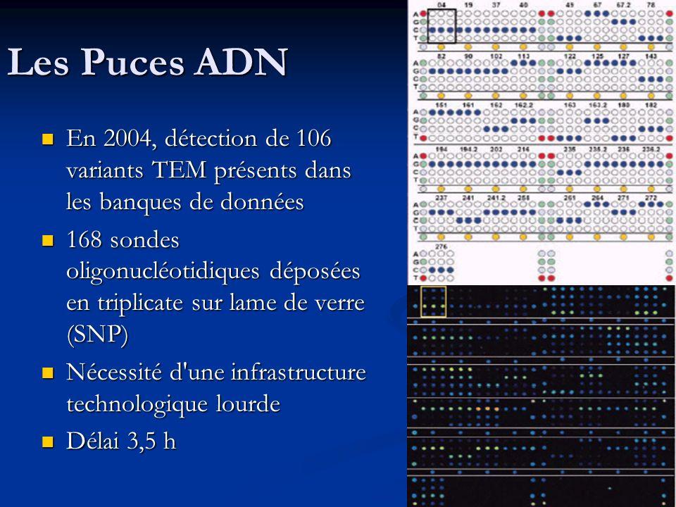 Les Puces ADN En 2004, détection de 106 variants TEM présents dans les banques de données.
