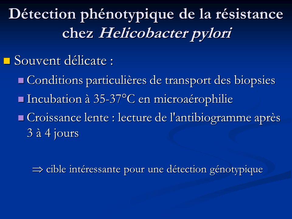 Détection phénotypique de la résistance chez Helicobacter pylori