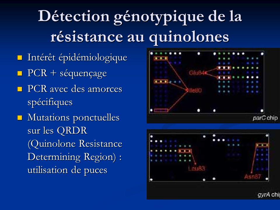 Détection génotypique de la résistance au quinolones