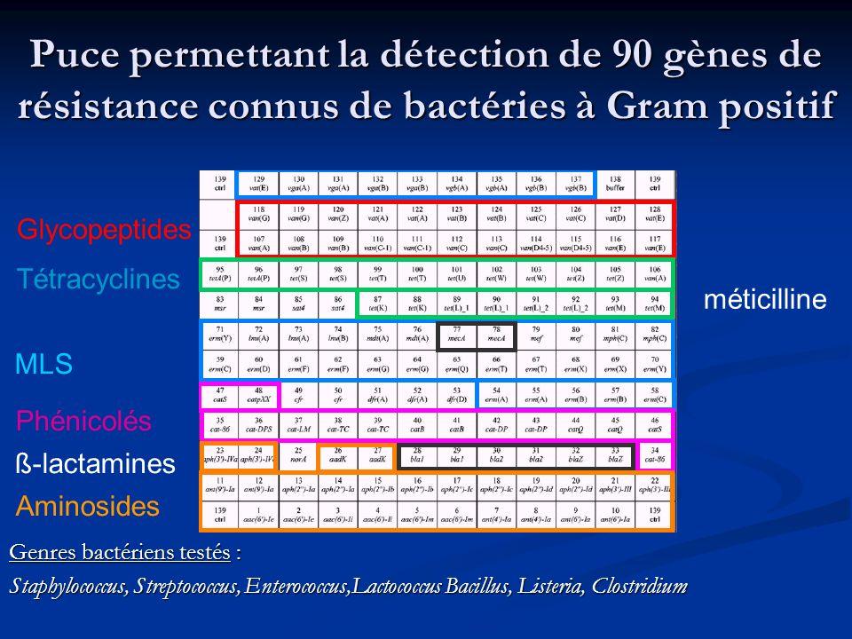 Puce permettant la détection de 90 gènes de résistance connus de bactéries à Gram positif