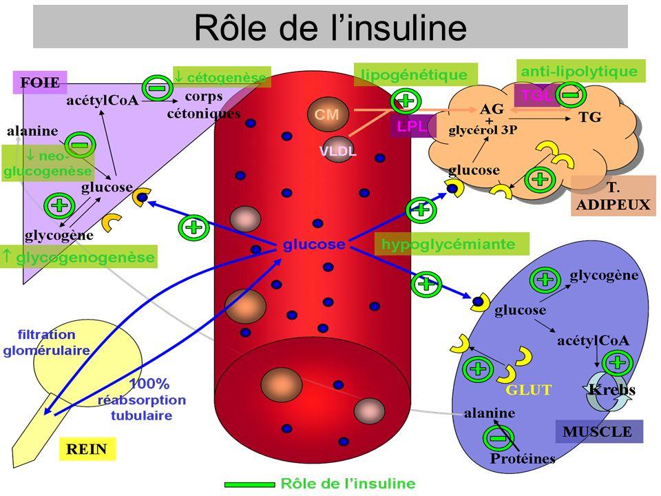 Rôle de l'insuline