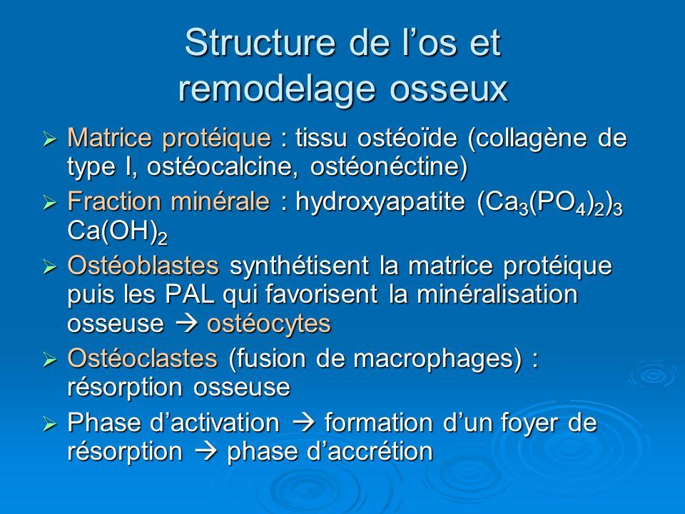 Structure de l'os et remodelage osseux