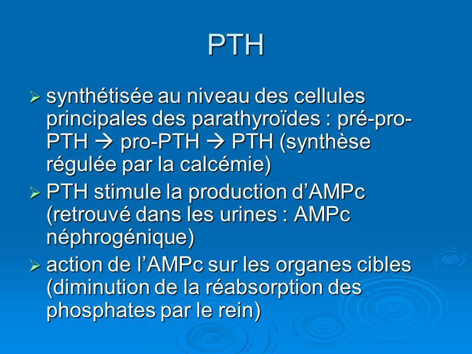 PTH synthétisée au niveau des cellules principales des parathyroïdes : pré-pro-PTH  pro-PTH  PTH (synthèse régulée par la calcémie)