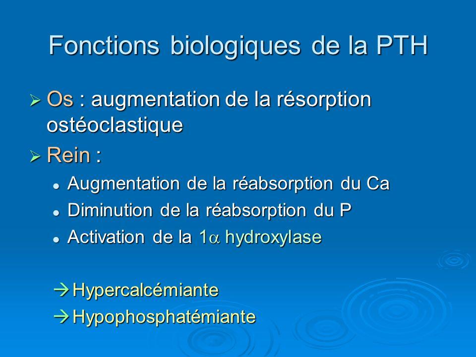 Fonctions biologiques de la PTH