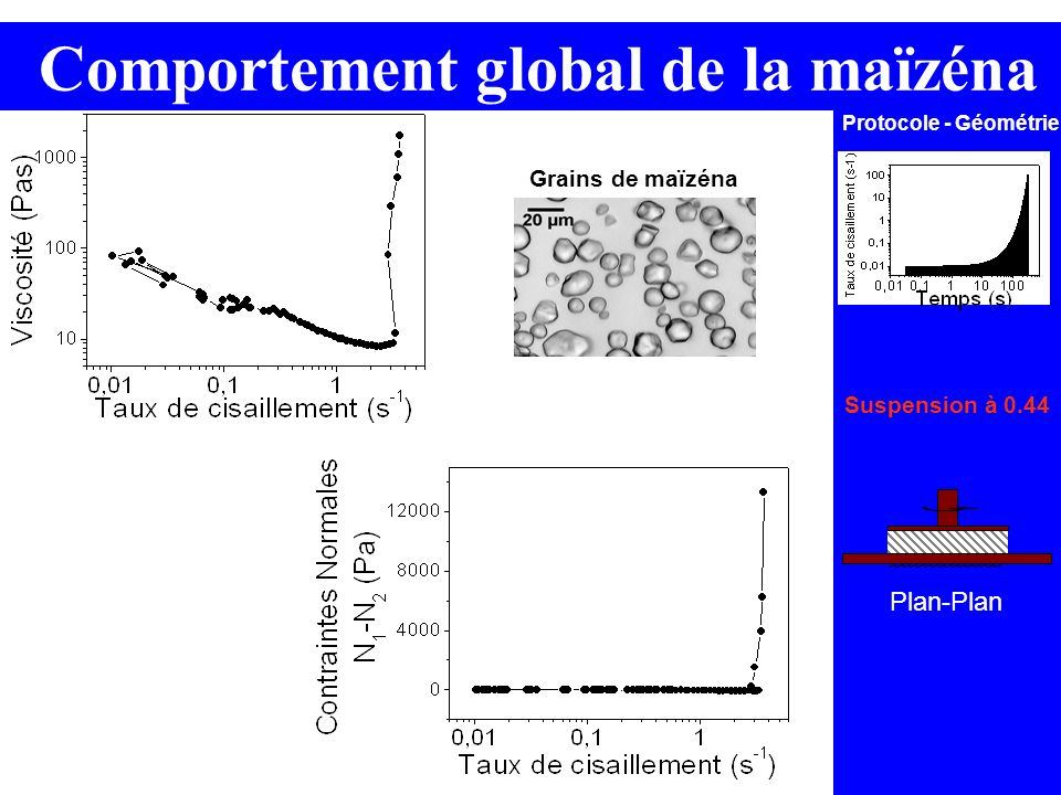 Comportement global de la maïzéna
