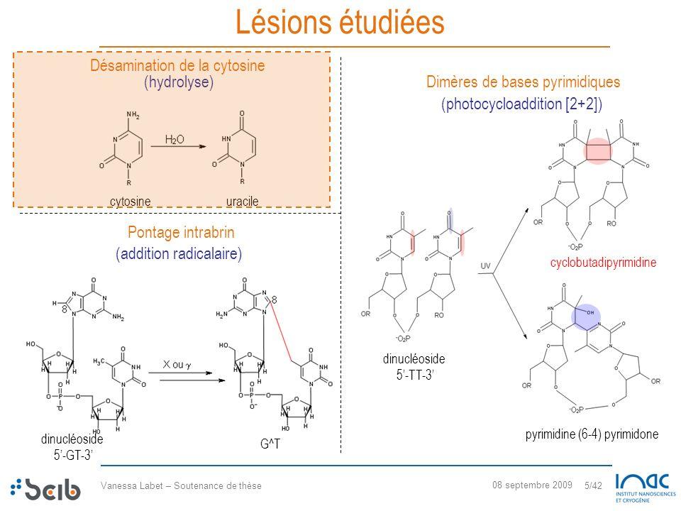 Lésions étudiées Désamination de la cytosine (hydrolyse)