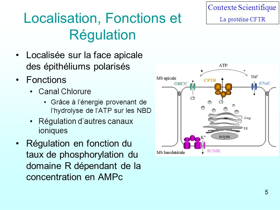 Localisation, Fonctions et Régulation
