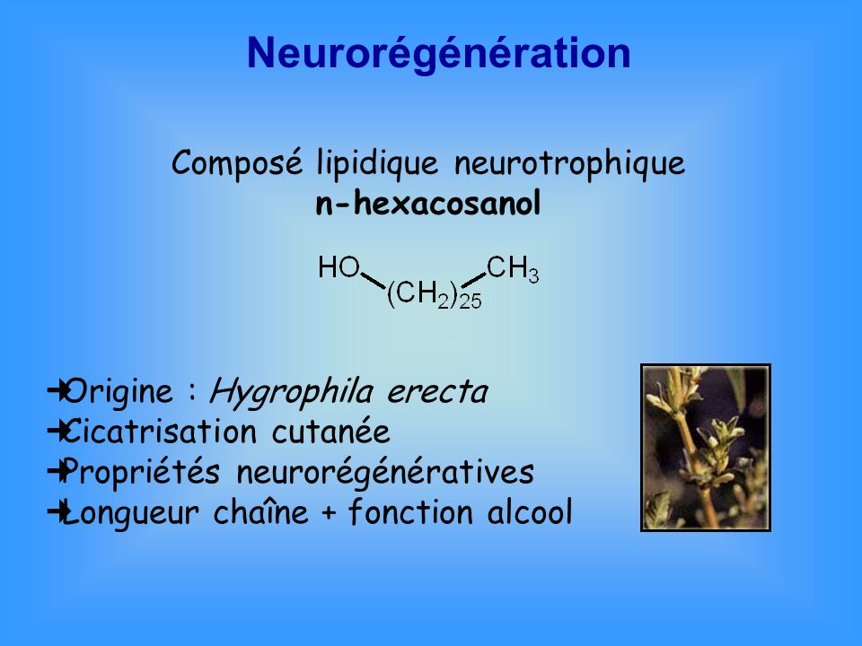 Composé lipidique neurotrophique